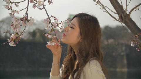 Wind blowing hair Japanese young women smelling cherry blossoms osaka castle bac ライブ動画