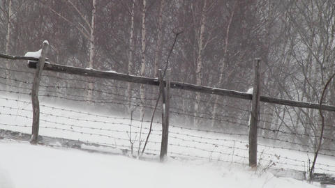 Blowing snow behind a wooden fence and barbed wire at the edge of a forest of bi Footage
