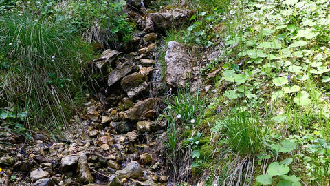 Small brook in the Bavarian Alps in summer Live Action