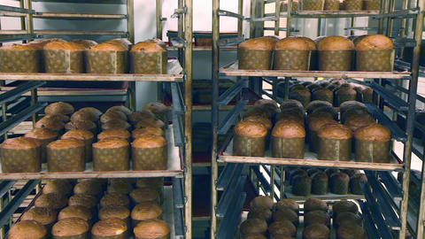 Bread on racks after cooking in an oven. Panorama Live Action