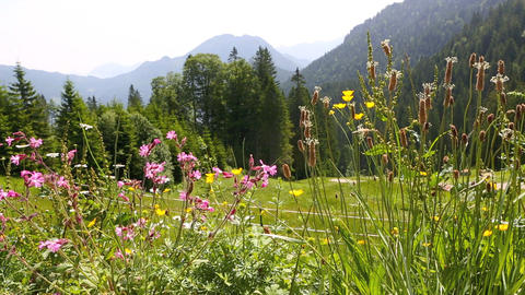 Mountain landscape in Bavarian Alps with colorful flowers in the foreground Footage