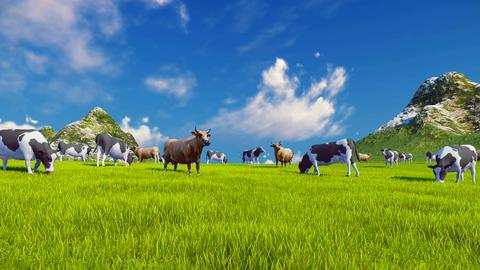 Dairy cows graze on alpine meadow Footage