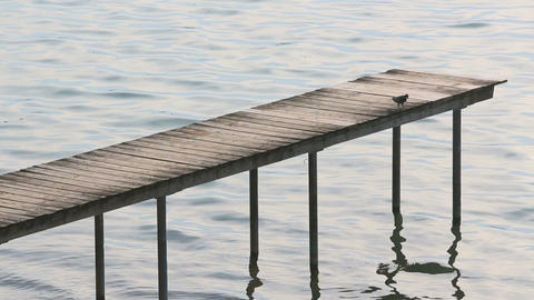 Dove Landing On A Dock stock footage