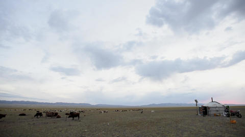 Mongolia - Nomad's gher in the Gobi desert Footage