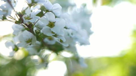 アジサイ 花 春 4K ビデオ