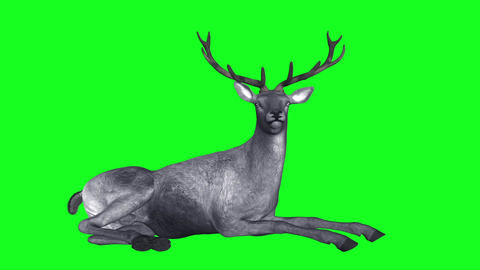 Deer - Gray - Laying Loop - Green Animation