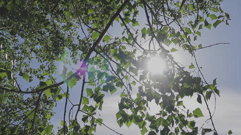 The sun penetrates its rays through the foliage of a tree Footage