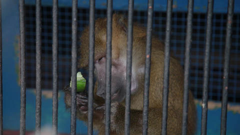 Monkey in cage at zoo GIF