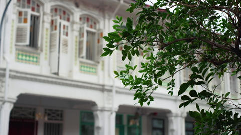 Singapore - Pink flower with traditional shophouses in the background. Pedestal camera movement. Live Action