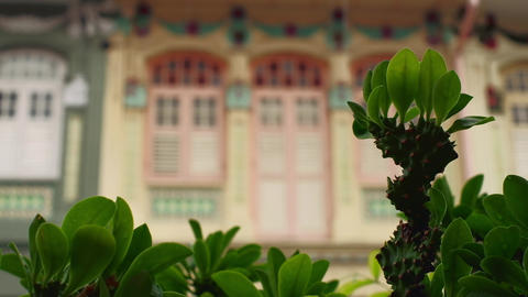 Singapore - Plant on rainy day with traditional shophouses defocused in background . Pedestal camera Live Action