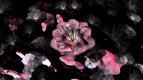 Blossom ART CG動画素材