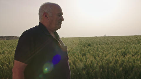 Steadycam shot of an old farmer walking in a green wheat field GIF