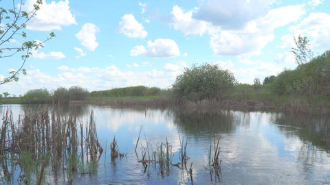 Landscape on a small pond Footage