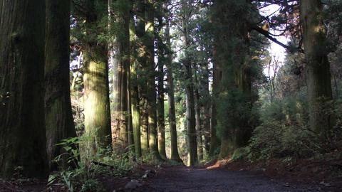 箱根 杉並木 ビデオ