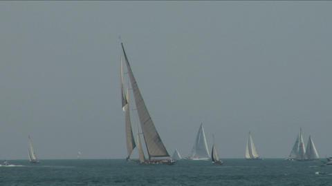 old sail regatta 16 Stock Video Footage