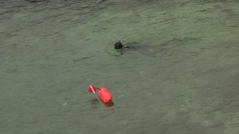 scuba diver 01 Stock Video Footage