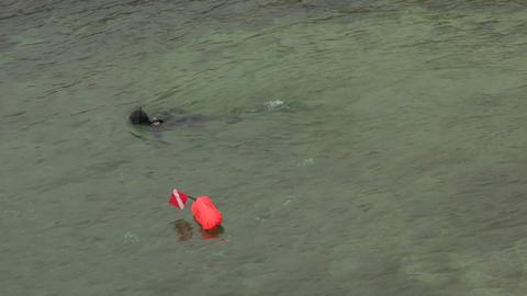 Scuba Diver 01 stock footage