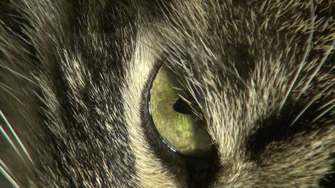 The cat's eye Stock Video Footage