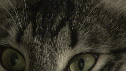 Cat's eyes Stock Video Footage