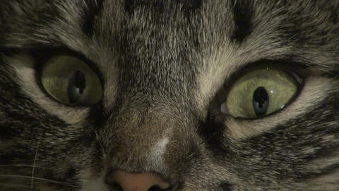 Cat's Eyes stock footage