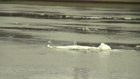 Ice floe floats in water Footage