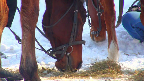 horse eats hay Stock Video Footage