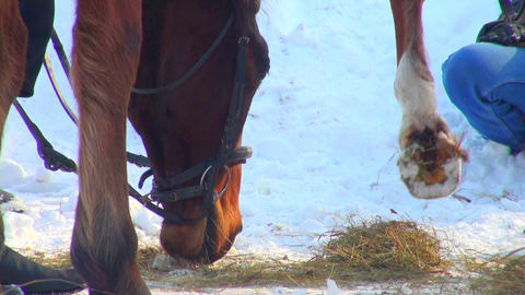 horse eats hay Stock Video Footage