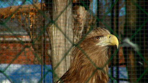 eagle looks out for extraction Stock Video Footage