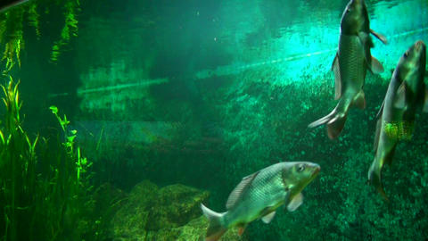 Beautiful fishes in water Footage