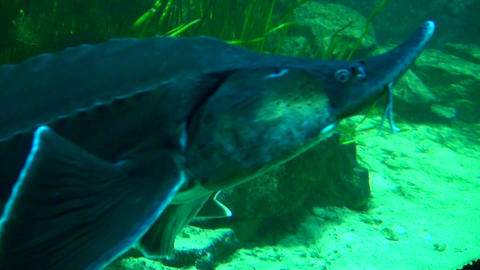 Beautiful fishes in water Stock Video Footage