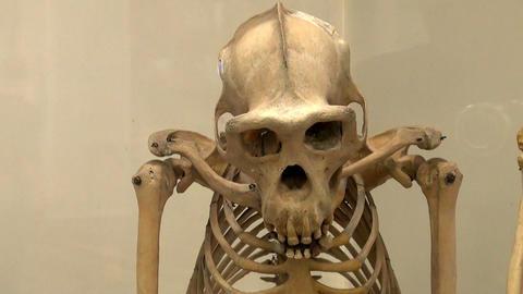 Skull Stock Video Footage