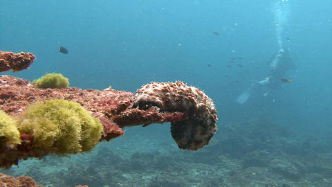 An amazing creation of sea cucumber Footage