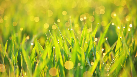 Grass And Dew Are Trembling On The Wind stock footage