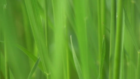 Green Grass Macro Close Up Background Footage