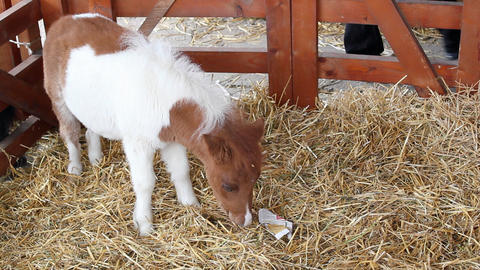 Cute pony horse baby Footage