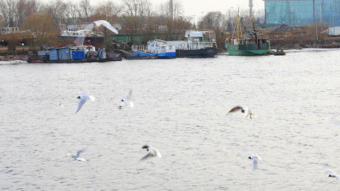 Seagulls Over The Water. Slow Motion stock footage