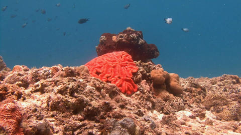 Scenic beautiful coral reef Live Action