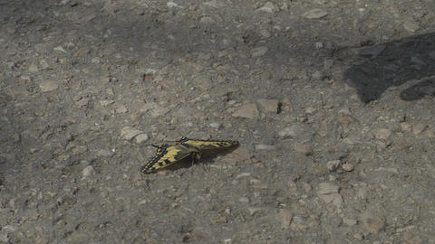 Butterfly that is sitting on ground ライブ動画
