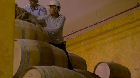 TEQUILA, MEXICO - CIRCA FEB 2017 - Two Mexican plant workers wearing hard hats Live Action