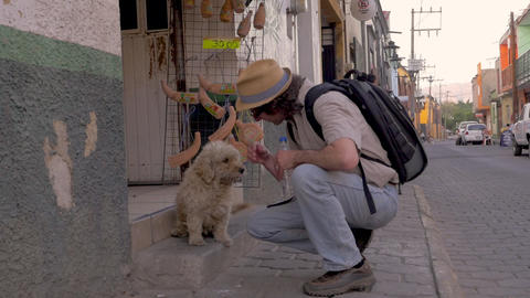 Caucasian man wearing a backpack and a hat bends down to pet a friendly stray Footage