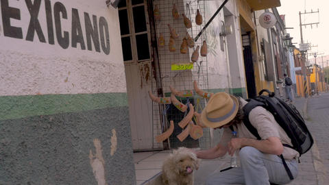 Caucasian tourist man wearing a backpack and a hat petting a stray dog next to a ビデオ