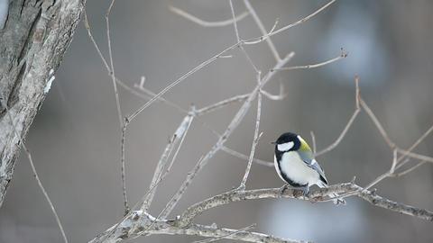 野鳥ー5 ビデオ