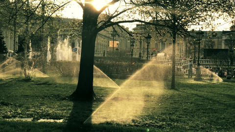 Automated irrigation system or sprinklers in Moscow city park at sunset Footage
