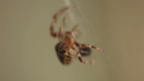 Spider on web close up Footage