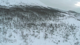 Aerial shot of a hillside with bare trees in winter Footage