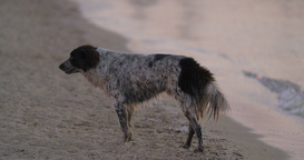 Stray dog wandering at the seaside Footage