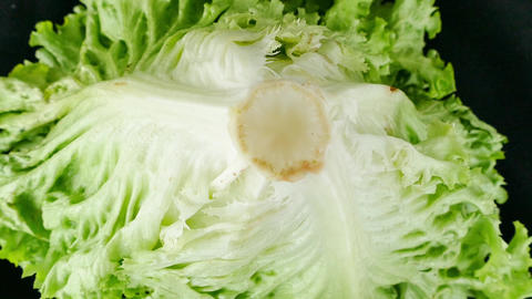 fresh curly lettuce on the black floor Stock Video Footage