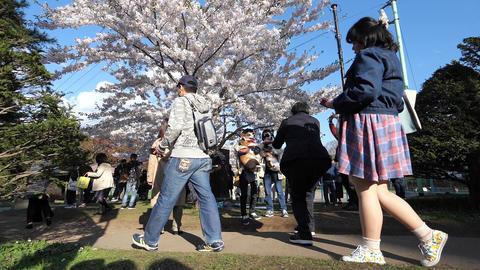 桜と人 ビデオ