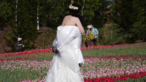 チューリップ畑の新婚カップル ビデオ