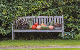 Autumn Bench with Pumpkins Giethoorn Photo